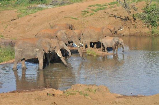 Three Cities Madikwe River Lodge: group at river