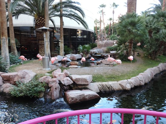 Flamingo Las Vegas Hotel & Casino: Lago com Flamingos