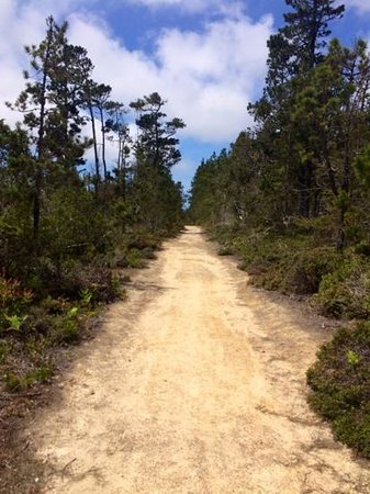 Russian Gulch State Park: North Boundary Trail