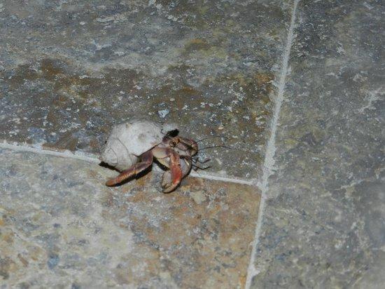 Coco Beach Resort: Little friend