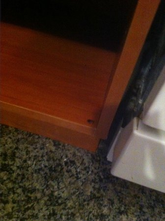 Westgate Palace Resort : Roach on the move