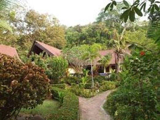Phi Phi Paradise Pearl Resort: バンガロウに続く道。