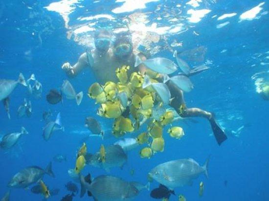 Hawaii Ocean Rafting : Snorkeling near Lanai