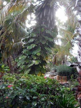 Captain Don's Habitat: Lush vegetation throughout resort