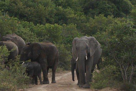 Lalibela Game Reserve: Elefantfamilie