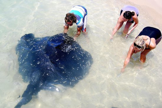 Cape Agulhas Backpackers: Feed Stingray's in the Harbour