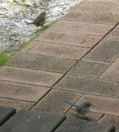 Donnelly Lakes Chalets: Girly Wrens visiting our patio