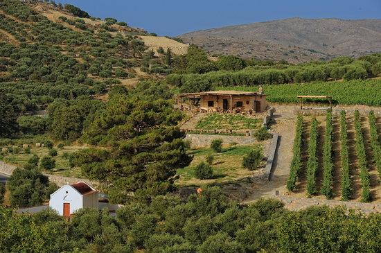 Vintage Routes Crete WIne and Food Tours