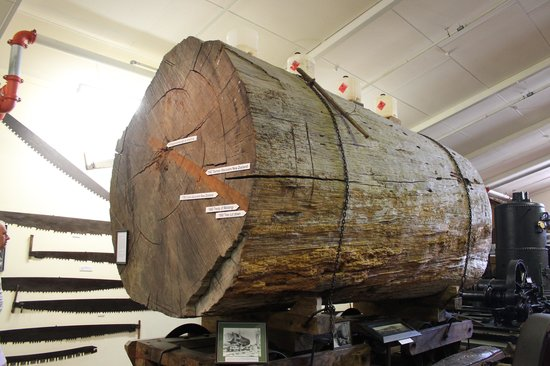 The Kauri Museum: Kauri Tree