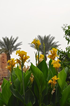 Movenpick Resort & Spa Dead Sea: Along the path to the Village and Pools