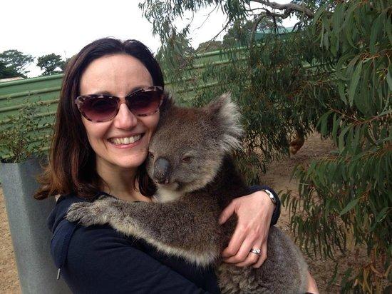 Paul's Place Wildlife Sanctuary : Il Koala!