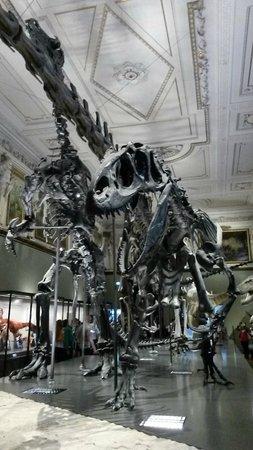 Muséum d'histoire naturelle de Vienne : The dinosaurs inside