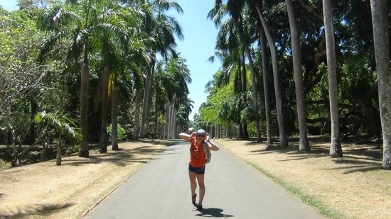 Royal Botanical Gardens: Аллея