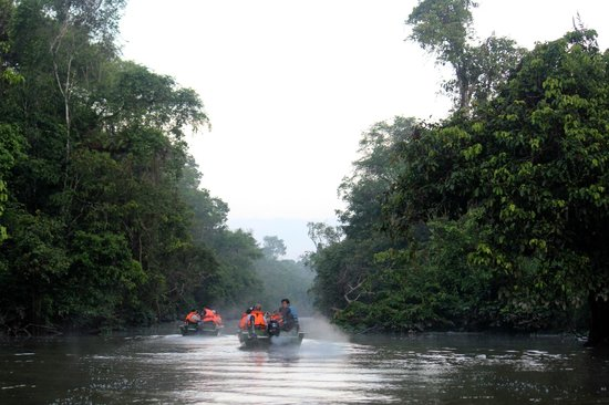 Sukau Rainforest Lodge: Early morning wildlife viewing cruise