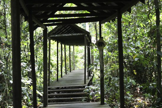 Sukau Rainforest Lodge: Boardwalk: Elephant crossing