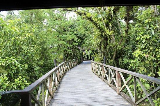 Sukau Rainforest Lodge: Entrance to the lodge