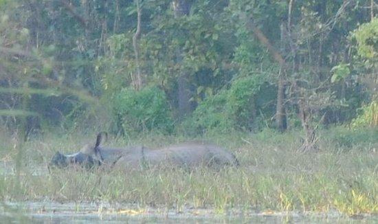 River View Jungle Camp: Rhino on jungle walk