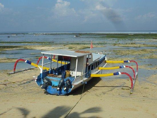 Indiana Kenanga Villas : La mer devant l'Indiana Kenanga à marée basse