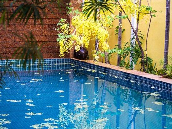 Golden Mango Inn : Pool at the Golden Mango