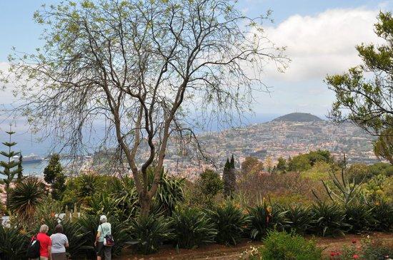 Madeira Botanical Garden : Jardin botanique