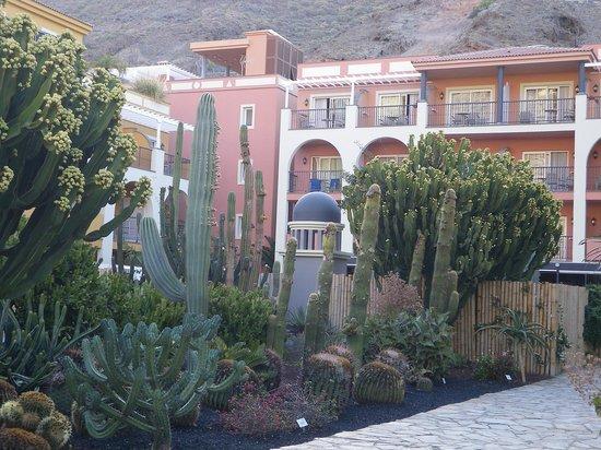 Cordial Mogan Playa : Chambres sur le jardin de cactus