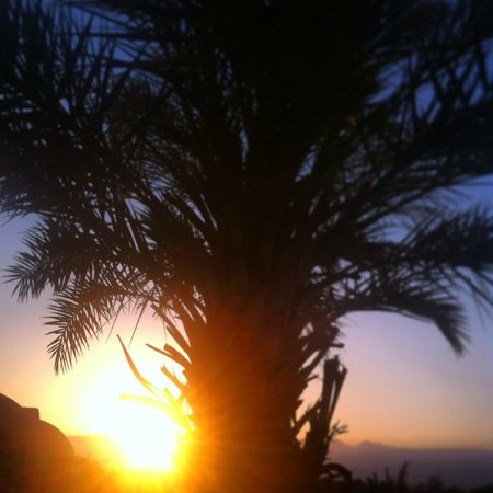Kibbutz Lotan: The rising sun and palm trees with their delicious Madjoul Dates!