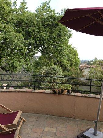 Villa Vivendi : Gemütlicher Balkon mit Hauskatze Cleo