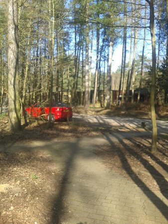 Center Parcs Elveden Forest: Cars were everywhere!! This was the view from our villa for 3 days and nights