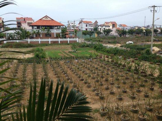 Sunshine Hotel Hoi An: Мандариновый сад под окнами отеля