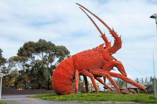 0b30e586cd Lobster - Picture of The Big Lobster, Kingston SE - TripAdvisor