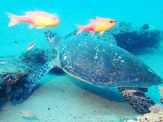 Simply Scuba Dive Charters: Turtle in Ponta