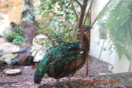 Lodz Zoo : Bird