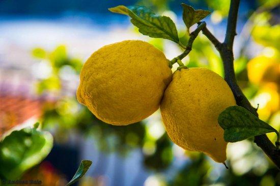 Residence La Villetta : L'albero di limoni del residence