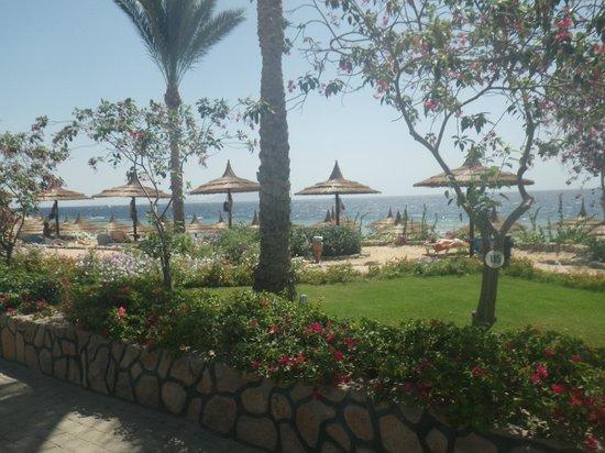 Royal Grand Sharm Hotel: garden