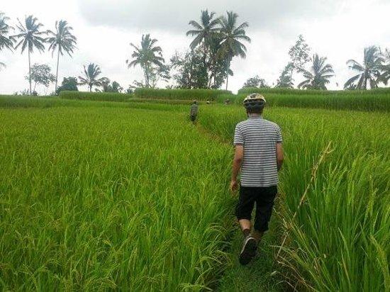 Bali Breeze Tours: A walk through the field