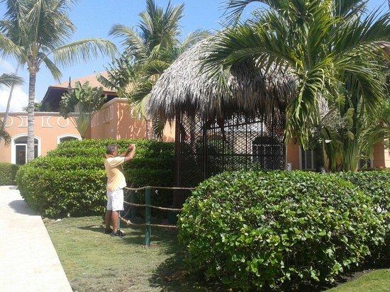 Majestic Elegance Punta Cana : Sacando foto a las aves