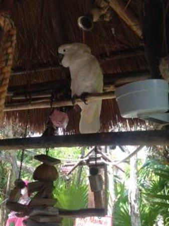 El Cozumeleño Beach Resort: Coconut Friend #1