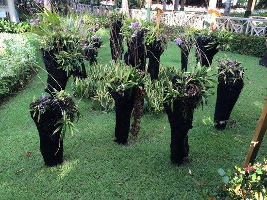 Iberostar Dominicana Hotel: Jardines
