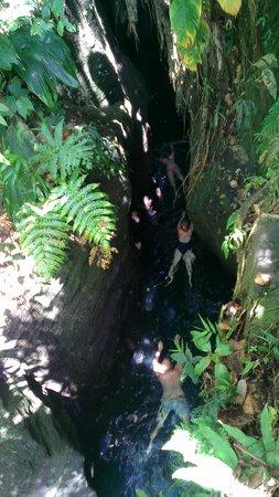 Dominica Botanic Gardens: Titou Gorge with Web Tours