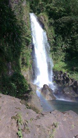 Dominica Botanic Gardens: Trafalgar Falls with WebTours