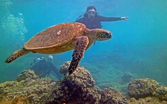 Living Ocean Scuba: Eliza & John dive Hanauma Bay with a Turtle!