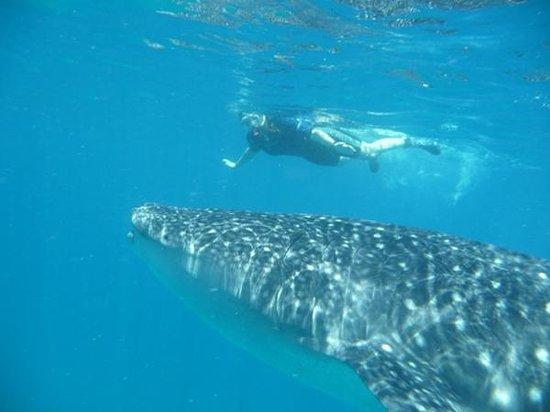 Mirihi Island Resort: It is about THAT big!