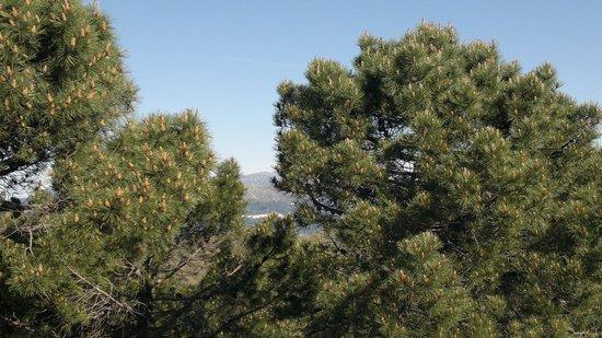 Los Reales de Sierra Bermeja: Сосны, небо, сквозь сосеы виден какой-то городишко