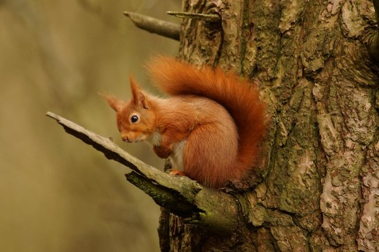 Riverside Mill Bed and Breakfast: Red squirrel at Eskrigg