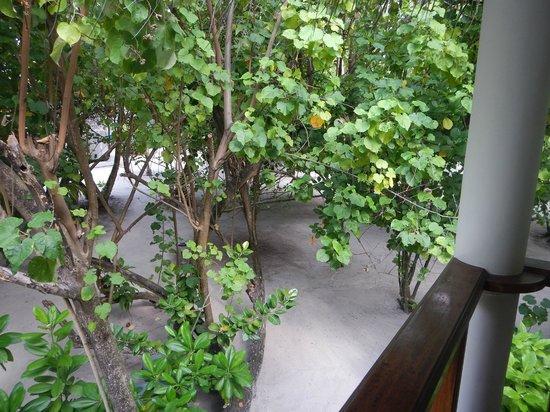 Fihalhohi Island Resort: Vue depuis le balcon des chambres 37 et 38