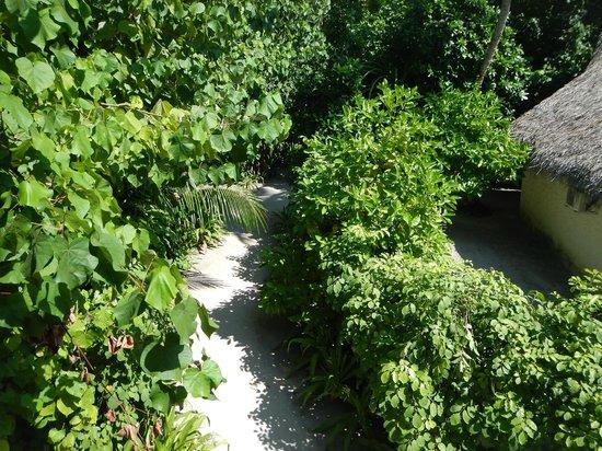Fihalhohi Island Resort: Chemin pour aller à la réception et au restaurant