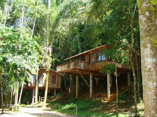 Bergendal Eco & Cultural River Resort: B lodge tussen de bomen