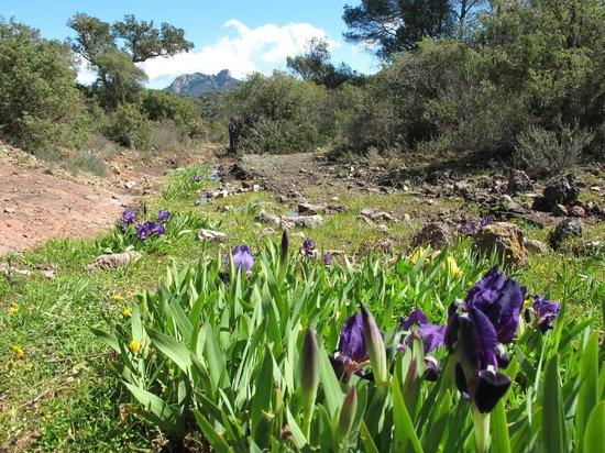 Esterel Caravaning: Nature around the campground