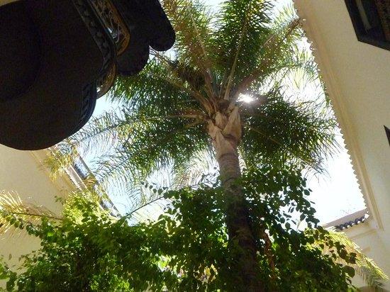 Dar Jaguar: een palmboom zorgt voor nodig schaduw in binnentuin