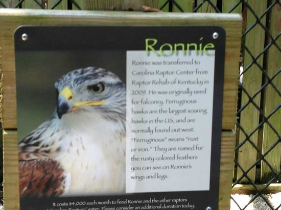Carolina Raptor Center: I love falcons